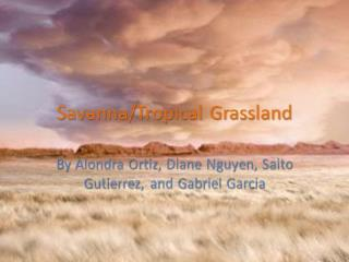 Savanna Tropical Grasslands