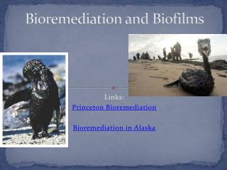 Bioremediation and Biofilms