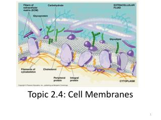Topic 2.4: Cell Membranes