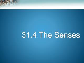 31.4 The Senses