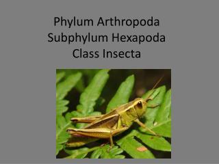 Phylum  Arthropoda Subphylum  Hexapoda Class  Insecta