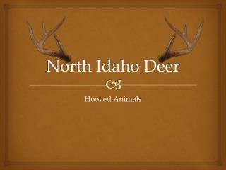 North Idaho Deer
