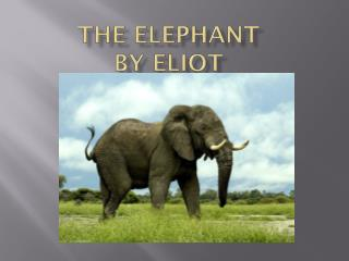 The Elephant by Eliot