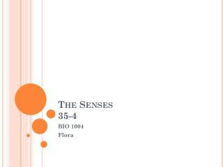 The Senses  35-4