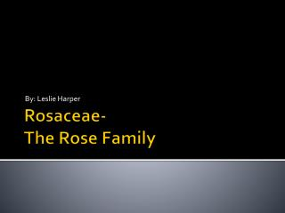 Rosaceae- The Rose Family
