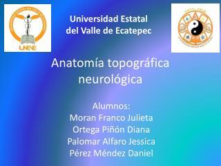 Anatomía  topográfica neurológica