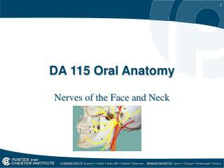 DA 115 Oral Anatomy