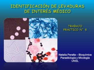IDENTIFICACIÓN DE LEVADURAS de interés médico