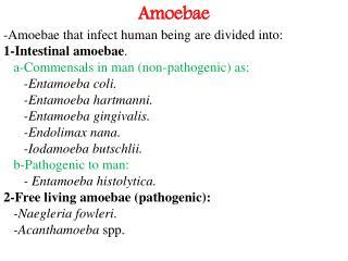 Amoebae -Amoebae that infect human being are divided into: 1-Intestinal amoebae .