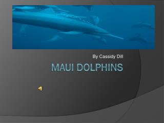 Maui Dolphins