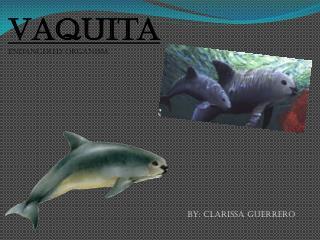 Vaquita Endangered organism