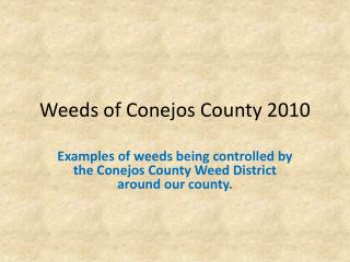 Weeds of Conejos County 2010