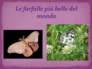Le  farfalle piú  belle  del mondo