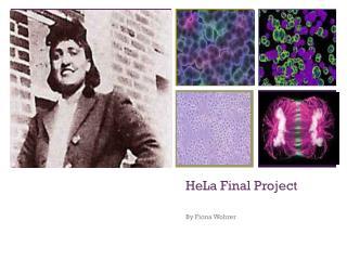 HeLa  Final Project