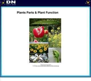 Plants Parts & Plant Function