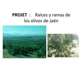 PROJET   :     Raíces  y ramas de          los  olivos  de Jaén