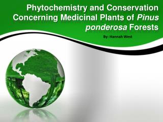 Phytochemistry  and Conservation Concerning Medicinal Plants of  Pinus  ponderosa  Forests