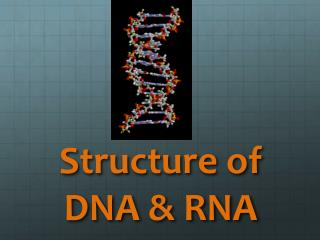 Structure of DNA & RNA