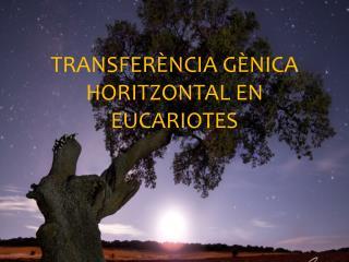 Transferència gènica horitzontal