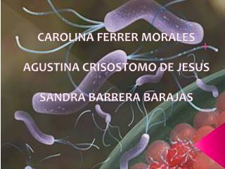 CAROLINA FERRER MORALES AGUSTINA CRISOSTOMO DE JESUS SANDRA BARRERA BARAJAS