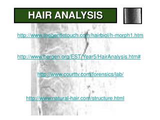 http://www.thegentletouch.com/hairbiol/h-morph1.htm