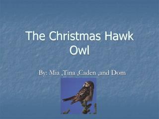 The Christmas Hawk Owl