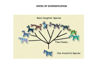 RATES OF DIVERSIFICATION