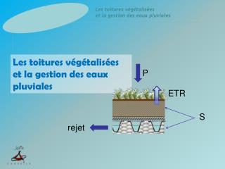 Les toitures végétalisées et la gestion des eaux pluviales