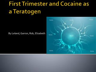 First Trimester and Cocaine as a Teratogen