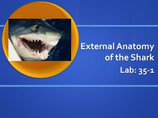 External Anatomy of the Shark