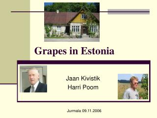 Grapes in Estonia