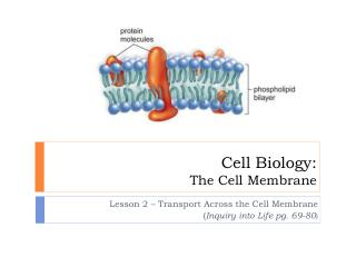 Cell Biology: The Cell Membrane