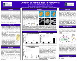 Conduit of ATP Release in  Astrocytes