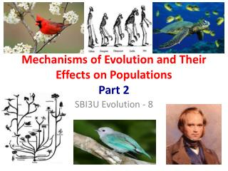 Mechanisms of Evolution and Their Effects on Populations  Part 2