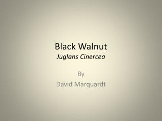 Black Walnut Juglans Cinercea