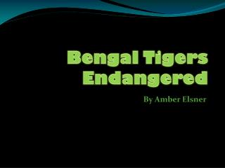 Bengal Tigers Endangered