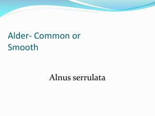 Alder- Common or  Smooth