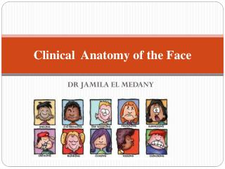 Clinical  Anatomy of the Face