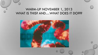 Warm-up November 1, 2013 what is this? And…what does it do???