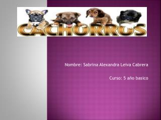Nombre: Sabrina Alexandra Leiva  Cabrera Curso: 5 año  basico