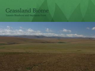 Grassland Biome