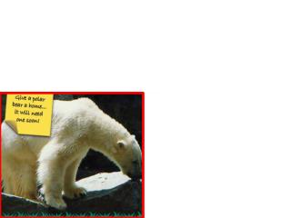 1	Canadians are meeting more polar bears, when they wander into towns. Why?