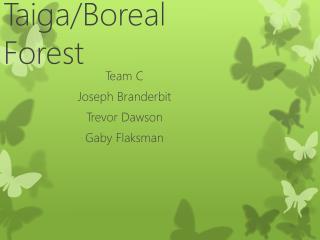 Taiga/Boreal Forest