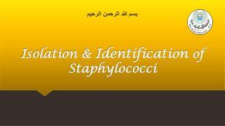 Isolation  &  Identification  of  Staphylococci