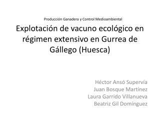 Explotaci�n de vacuno ecol�gico en r�gimen extensivo en  Gurrea  de G�llego (Huesca)