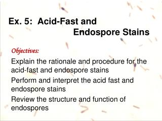 Ex.  5:  Acid-Fast and  Endospore  Stains