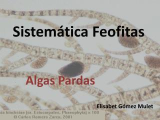 Sistemática  Feofitas