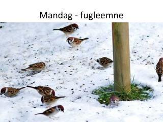 Mandag - fugleemne