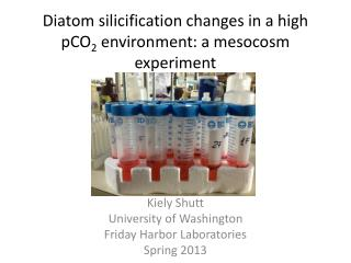 Diatom  silicification  changes in  a high pCO 2  environment: a  mesocosm  experiment