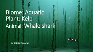Animal:  Whale shark